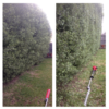 M230 Hedge Trimmer (long) hire